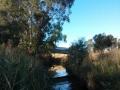darebin-creek-201403-021