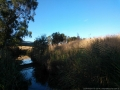 darebin-creek-201403-022
