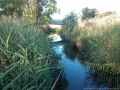 darebin-creek-201403-023