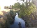 darebin-creek-201403-032