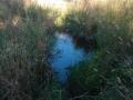 darebin-creek-201403-025
