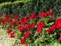 fitzroy-gardens-020