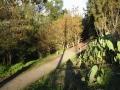 30b9_cactus_walk
