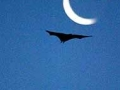 bats_victoriagardens