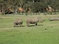 werribee-zoo-20060604-004