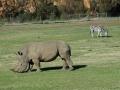 werribee-zoo-20060604-005