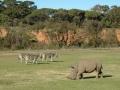 werribee-zoo-20060604-006
