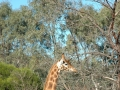 werribee-zoo-20060604-008