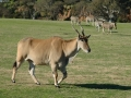 werribee-zoo-20060604-010