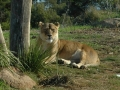 werribee-zoo-20060604-012