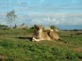 werribee-zoo-20060604-013