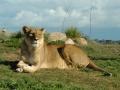 werribee-zoo-20060604-014