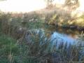 darebin-creek-201403-018