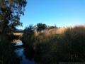 darebin-creek-201403-022