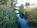darebin-creek-201403-023