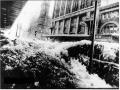 flood-1972