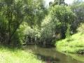 Merri_Creek