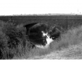 merricreek_bridge_1910_00111