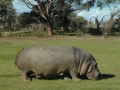 werribee-zoo-20060604-002
