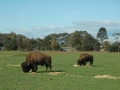 werribee-zoo-20060604-003