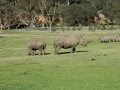 werribee-zoo-20060604-004