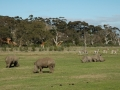 werribee-zoo-20060604-007